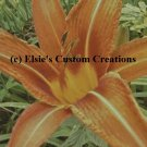 Tiger Lilly's 4 - PDF Cross Stitch Pattern