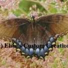 Butterfly 2 - PDF Cross Stitch Pattern