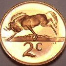 Rare South Africa 1969 Proof 2 Cents~12,000 Minted~Black Wildebeest~Free Ship