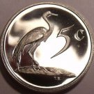 Rare Proof South Africa 1985 5 Cents~Only 9,859 Ever Minted~Blue Crane~Free Ship