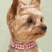 Pink Pooch Pearls