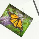 Monarch BUTTERFLY Postcards ( set of 10 )  ~gemsandstems.info~