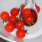 HAWAIIAN CURRANT Tomato ( Solanum lycopersicum ) - 15 seeds  ~gemsandstems.info~
