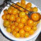 BLONDKOPFCHEN Tomato ( Solanum lycopersicum ) - 15 seeds  ~gemsandstems.info~