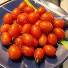 PRINCIPE BORGHESE Tomato ( Solanum lycopersicum ) - 15 seeds  ~gemsandstems.info~