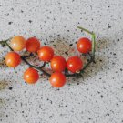 SPOON Tomato ( Solanum lycopersicum ) - 15 seeds  ~gemsandstems.info~