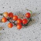 SPOON Tomato ( Solanum lycopersicum ) - 15 seeds  ~gemsandstems.info~
