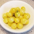 SNOW WHITE Tomato ( Solanum lycopersicum ) - 15 seeds  ~gemsandstems.info~