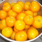 Heirloom EMMY Tomato ( Solanum lycopersicum ) - 15 seeds  ~gemsandstems.info~