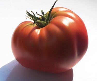 Heirloom PRUDEN'S PURPLE Tomato ( Solanum lycopersicum ) - 15 seeds  ~gemsandstems.info~