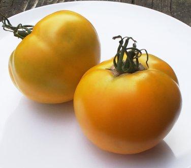 Artisan CARO RICH Tomato ( Solanum  ) - 15 seeds  ~gemsandstems.info~