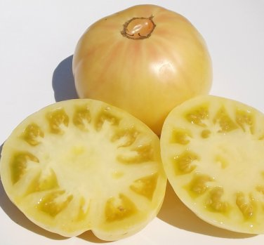 Heirloom WHITE TOMESOL Tomato ( Solanum ) - 15 seeds  ~gemsandstems.info~