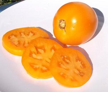 Heirloom COASTAL PRIDE ORANGE Tomato ( Solanum ) - 15 seeds  ~gemsandstems.info~