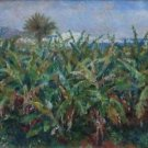 Field of Banana Trees, 1881 - 24x18 IN Poster