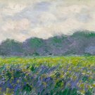 Field of Yellow Irises by Monet - 24x32 IN Canvas
