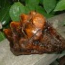 Prehistoric Mastodon Tooth - Museum Quality