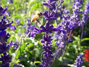 Purple Bee Print