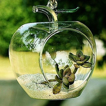 Apple Shaped Clear Glass Planter for Small Succulents, Air Plants or Rock