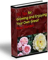 Growing Your Own Great Roses