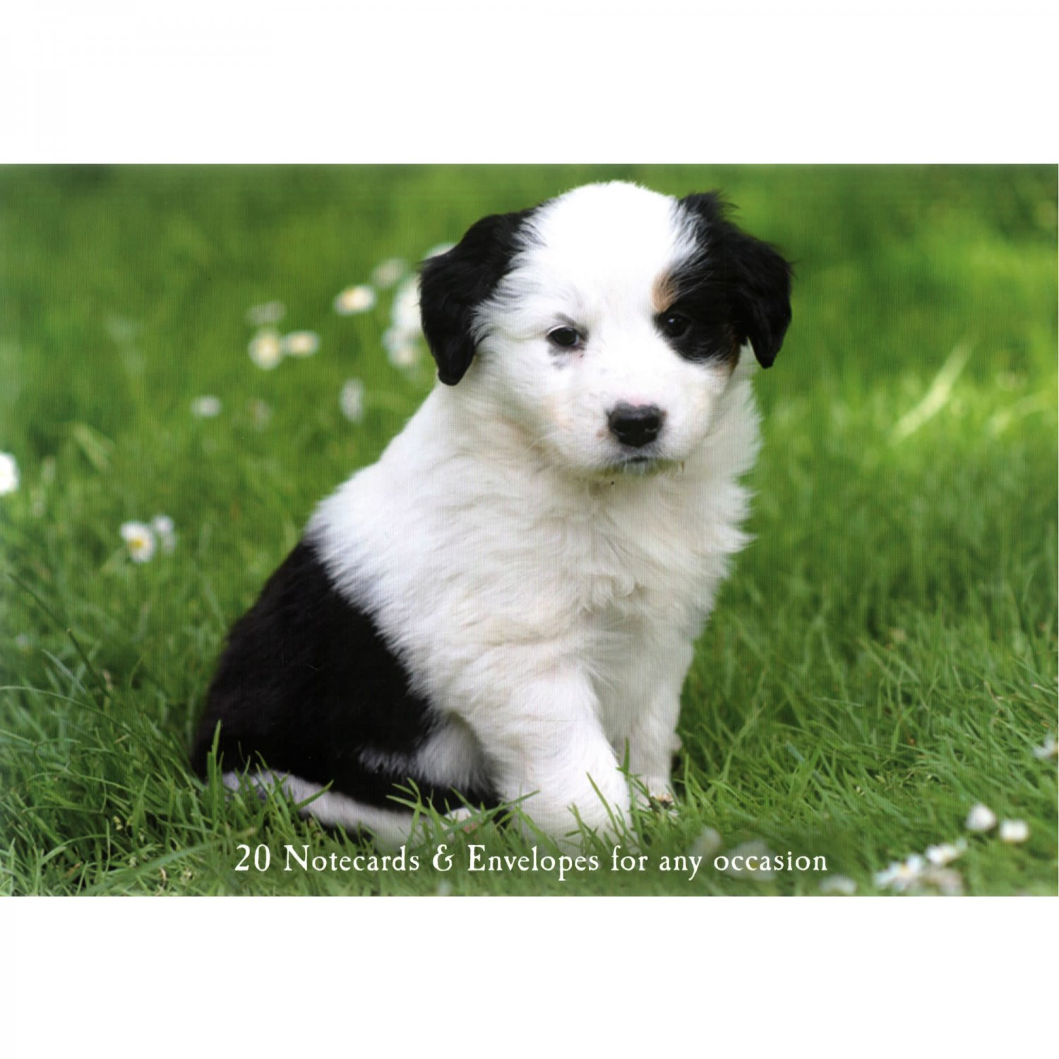 Puppies - Set of 20 Notecards and Envelopes with Photos of Puppies