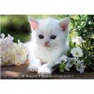 Fluffy Kittens Notecards and Envelopes set of 20