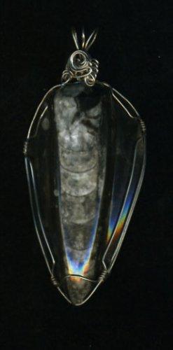 Orthoceras Fossil Pendant