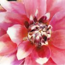 Hot Pink Dahlia - Box of 8 Greeting Cards (5 inch by 7 inch) come with 8 envelopes (blank inside)