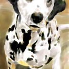 Dalmatian - Box of 8 5-inch by 7-inch Watercolor greeting cards with 8 envelopes