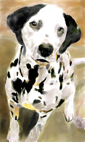 Dalmatian - Box of 8 5 inch by 7 inch Watercolor greeting cards with 8 envelopes