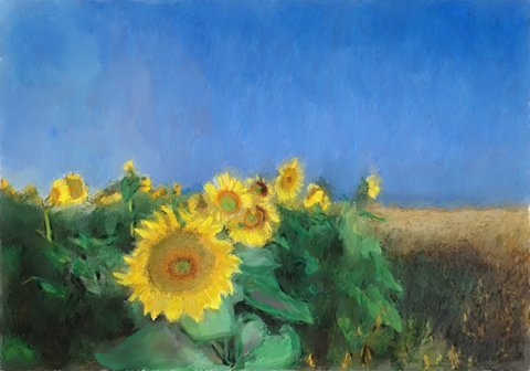 Sunflowers in Tuscany - Oil Painting - quality printed on 8 5-inch by 7-inch greeting cards