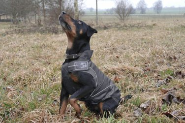 """On Sale: (XL) High Quality Dog Rain Jacket / All-Year Jacket, 21-1/4"""", Black Water Resistant"""