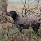"On Sale: (M) Warm Dog Winter Coat w/ Fleece Lining, 15.5"", Brown"