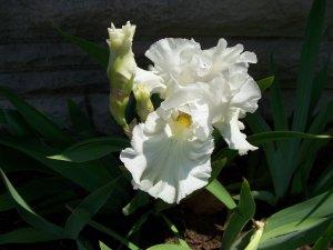 Stock Photo of Flower