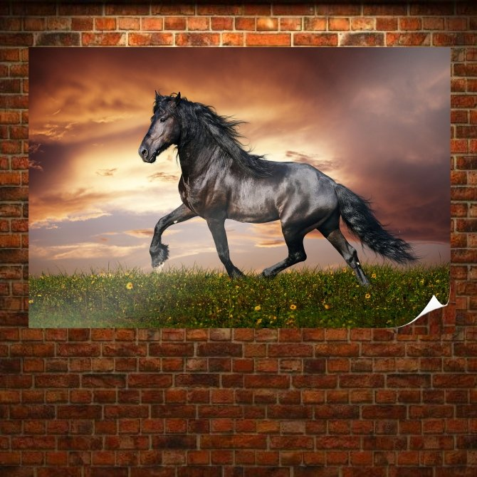 Beautiful Black Horse Poster 36x24 inch