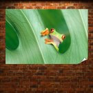 Cute Little Frog Poster 36x24 inch