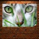 Cat Eyes  Art Poster Print  36x24 inch