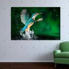 Animal Bird  Art Poster Print  36x24 inch