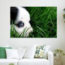 Cute Dog Lying On The Green Grass  Art Poster Print  36x24 inch