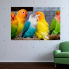 Colorful Parrots  Art Poster Print  36x24 inch