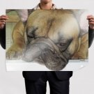 Sleeping French Bulldog  Art Poster Print  32x24 inch