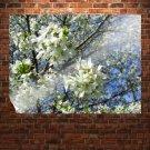 Flowering Cherry S Art Poster Print  32x24 inch