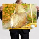 Gold Butterfly  Art Poster Print  32x24 inch
