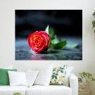 Red Rose Desktop  Art Poster Print  24x18 inch