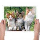 3 Cats  Art Poster Print  24x18 inch