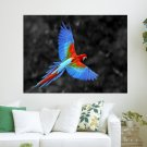 Great Colorful Parrot  Art Poster Print  24x18 inch