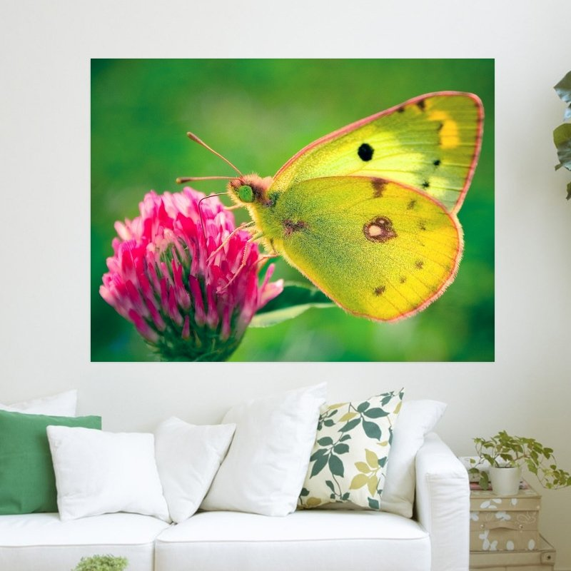 Yellow Butterfly  Art Poster Print  24x18 inch