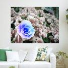 Beautiful Flowers  Art Poster Print  24x18 inch