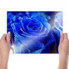 Blue Rose  Art Poster Print  24x18 inch