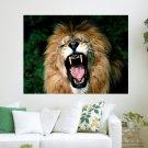 Yawning Lion  Art Poster Print  24x18 inch
