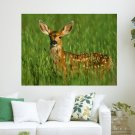 Deer In The Grass S Art Poster Print  24x18 inch